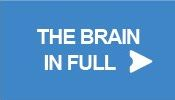 The Brain in Full